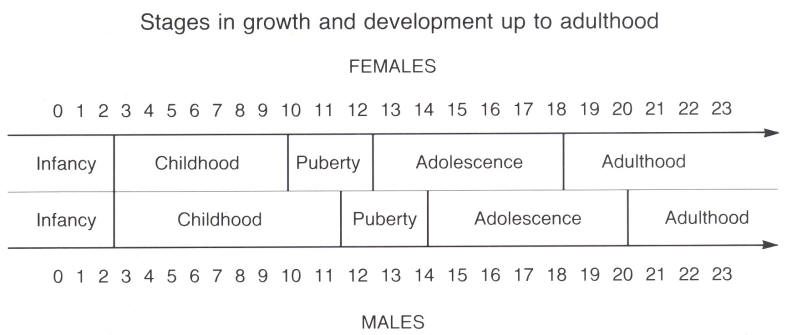 Female puberty stages consider, that